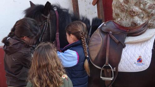 1 clase de iniciación a la equitación.