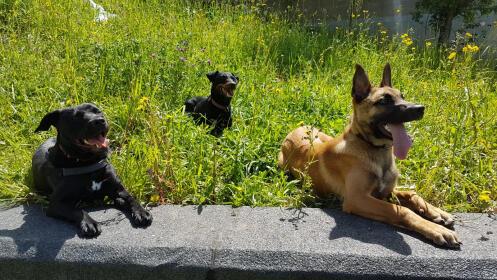 Curso de obediencia básica canina