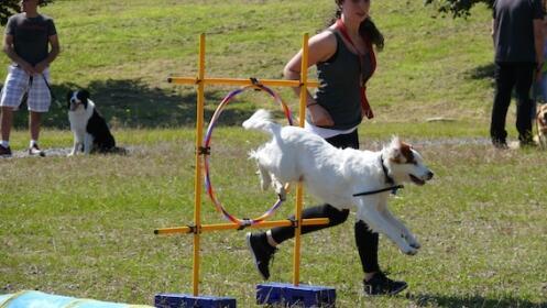 Pack mensual de clases de adiestramiento canino: Agility, obediencia…