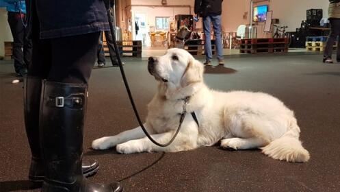Clases de adiestramiento canino. ¡Disfruta y aprende con tu perro!