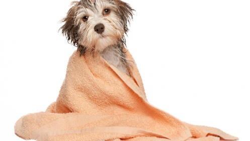 Sesión completa de peluquería para perros