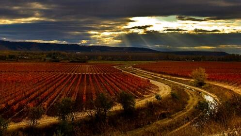 Visita Bodega Rioja Vega + Menú en Hotel Palacio de Pujadas